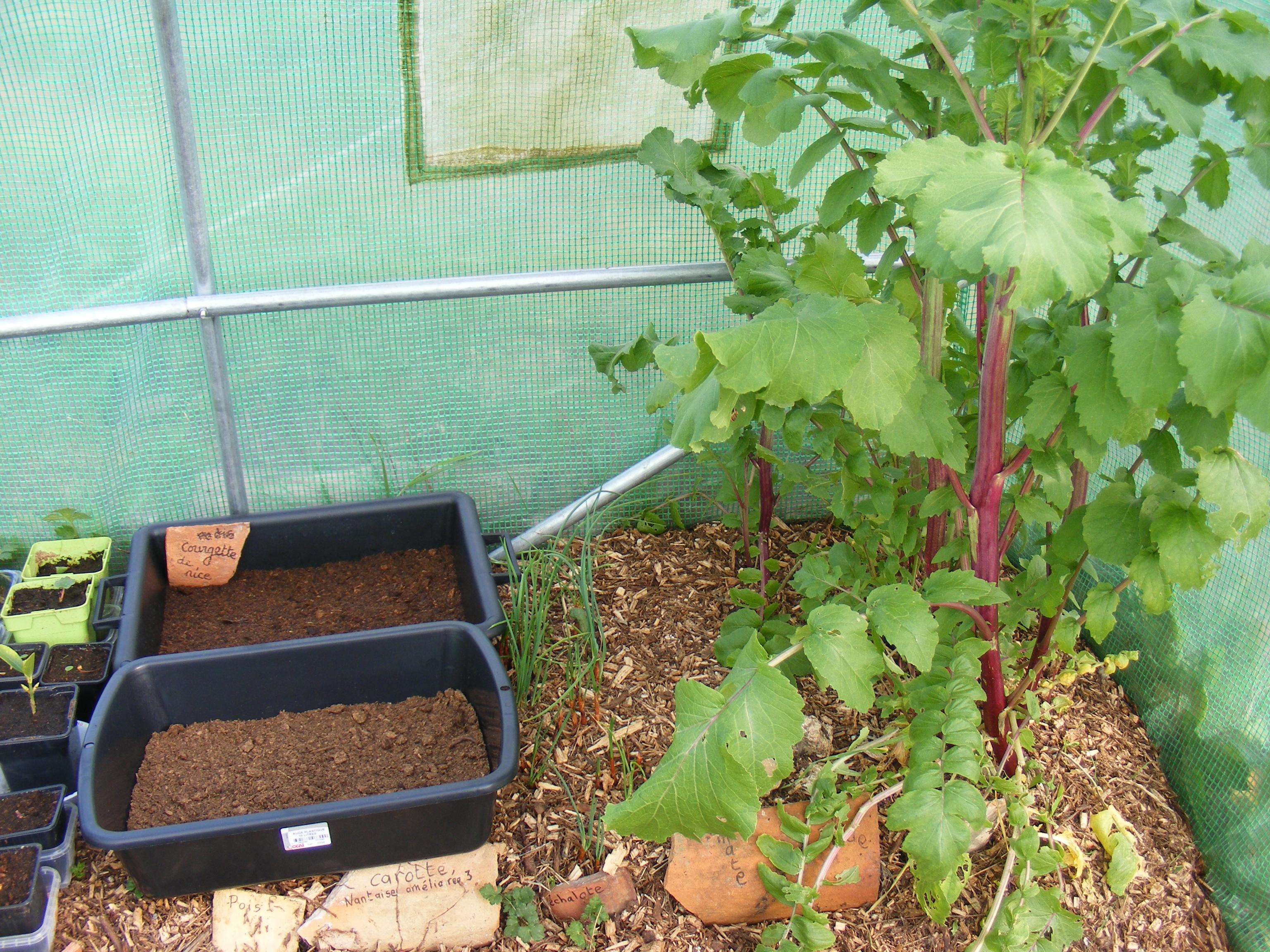 Entre des semis (donc les auges) de courge et les radis (près de la porte ceux-ci), vous avez des échalotes oubliées l'an dernier.